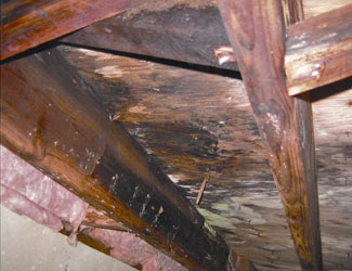 mold and rot in a Covington crawl space
