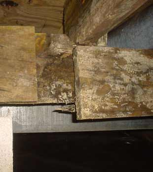 Extensive basement rot found in Covington by The Basement Doctor of Central Kentucky
