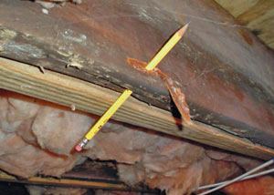 Destroyed crawl space structural wood in Shelbyville