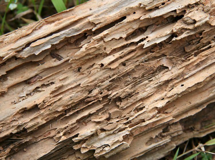 Termite Damage In Crawl Spaces In Taylorsville Lexington Covington Kentucky