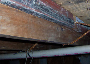 Rotting, decaying wood from mold damage in Bardstown